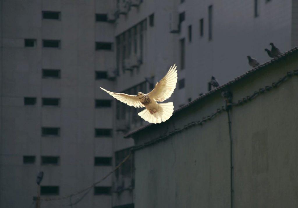 The Peace God